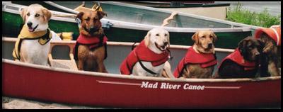A dog sitting on a boat