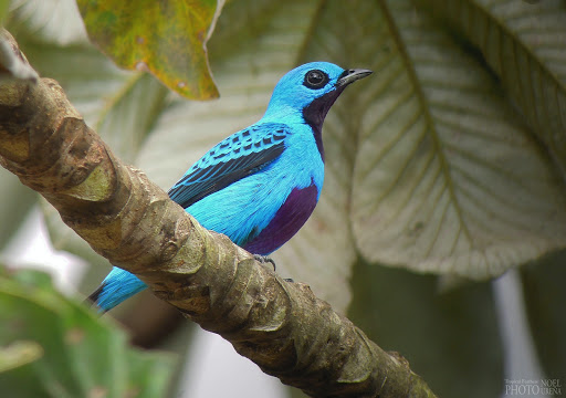 A small blue bird perched on a tree branch